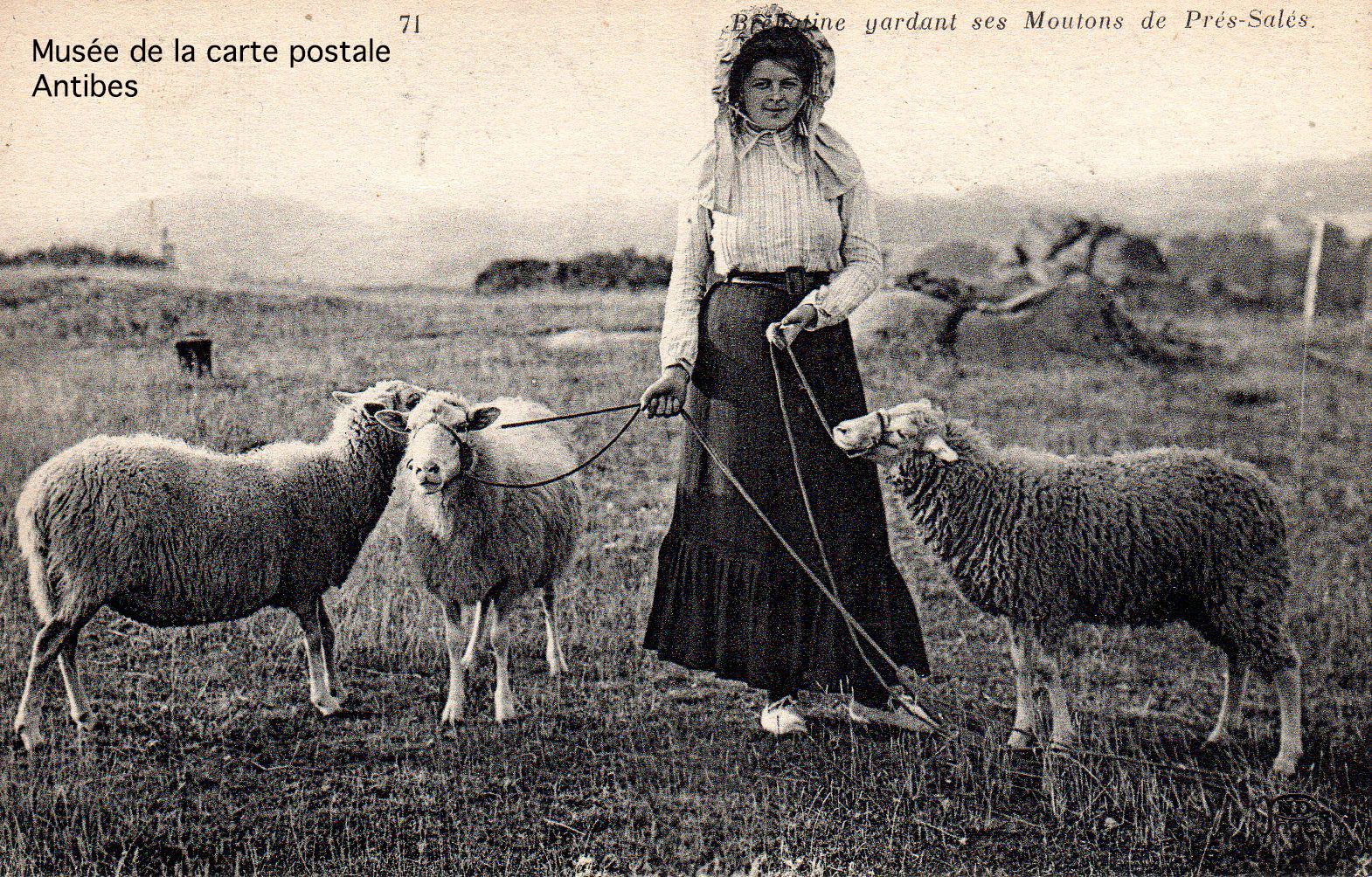Carte postale ancienne représentant une bergère et ses moutons, issue de l'exposition temporaire du musée de la Carte Postale.