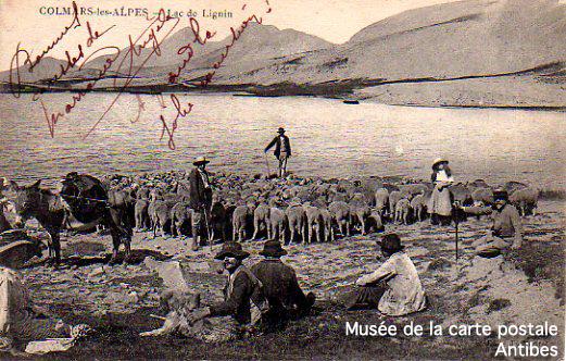 Carte postale ancienne, représentant des bergers et moutons à Colmars-les-Alpes, au lac de lignin.
