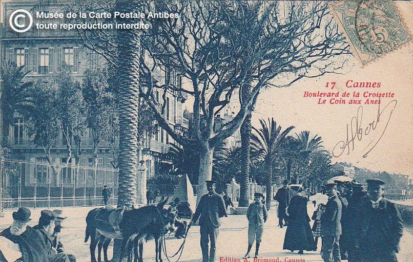 Carte postale ancienne représentant le coin aux ânes sur le boulevard de la croisette à Cannes, issue des réserve du musée de la carte postale, à Antibes.