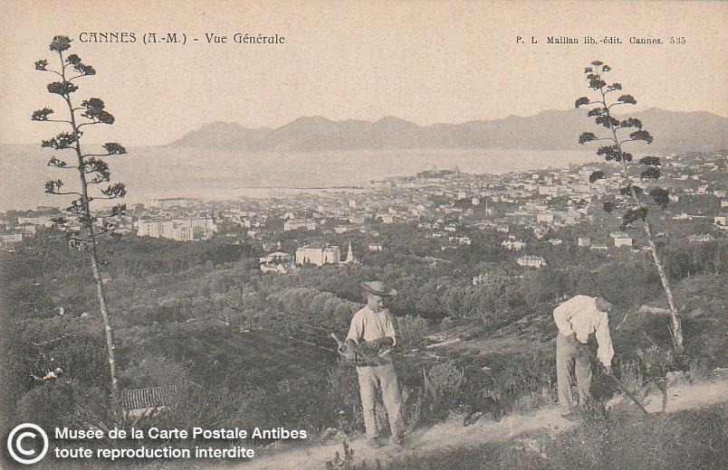 Carte postale ancienne représentant un panorama de Cannes, issue des réserve du musée de la carte postale, à Antibes.