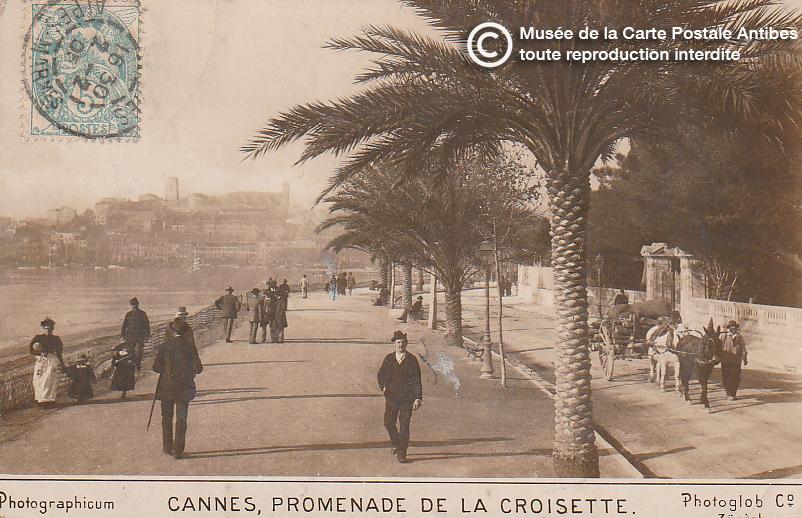 Carte postale ancienne représentant la promenade de la croisette à Cannes, issue des réserve du musée de la carte postale, à Antibes.