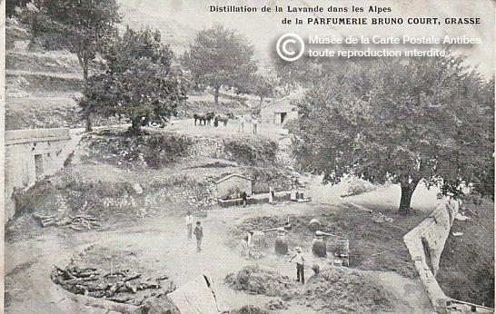 Carte postale représentant la distillation de la lavande à Grasse, pour réaliser du parfum.