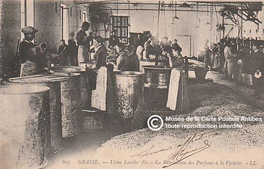 Carte postale représentant la fabrication du parfum de violette à l'usine Lantier Fils de Grasse.