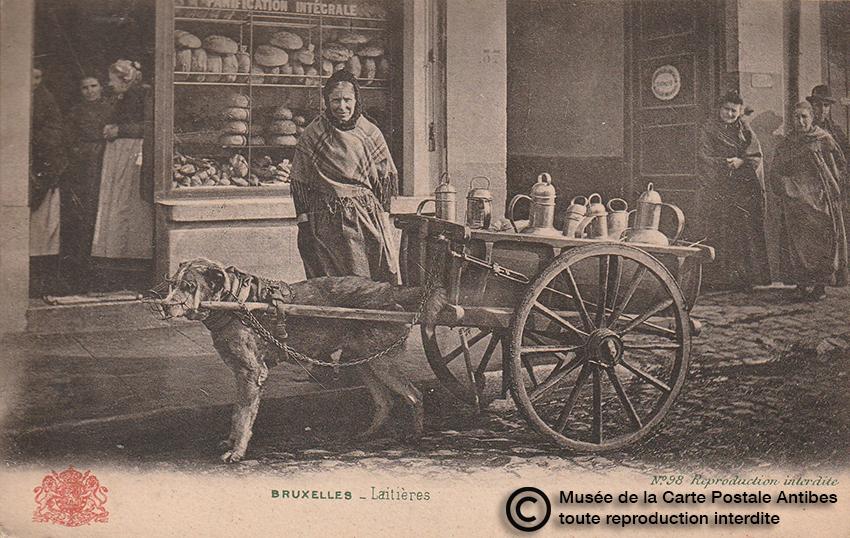 Carte postale belge représentant un chien d'attelage pour des laitières.