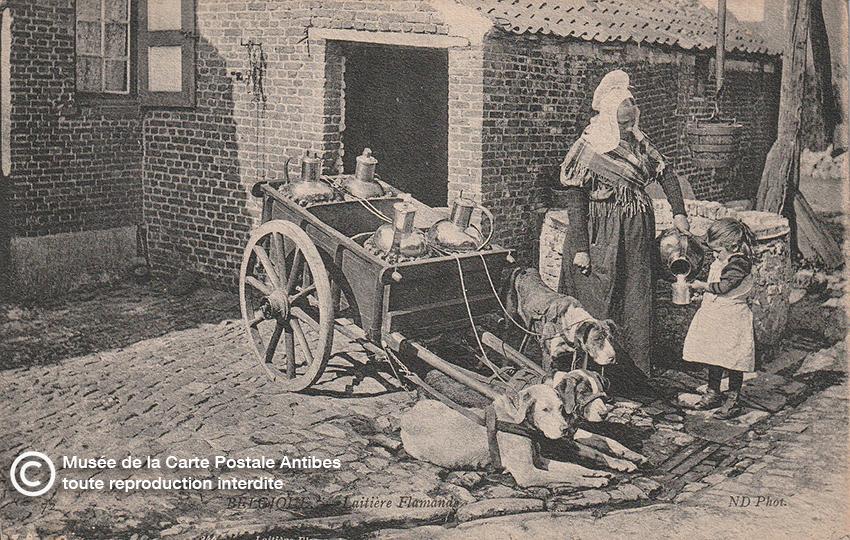 Carte postale belge représentant une laitière et son attelage de chiens.