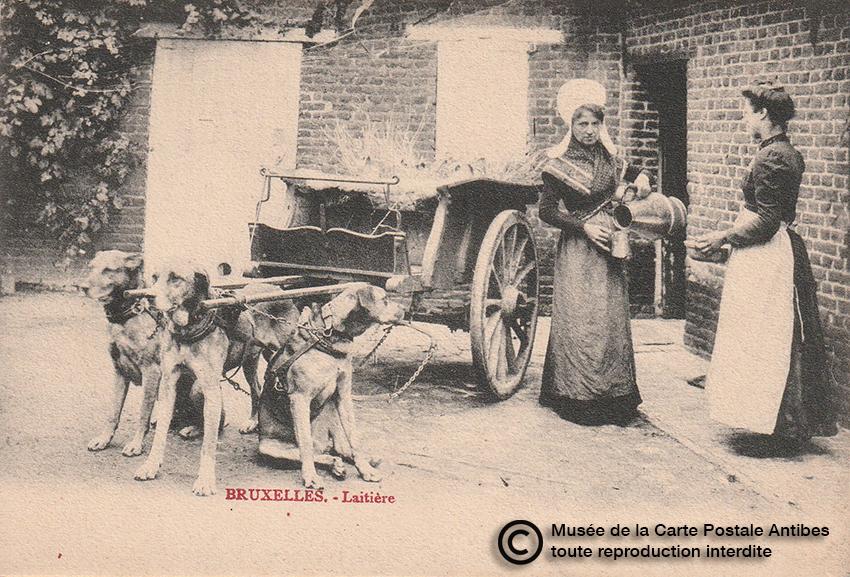 Carte postale belge représentant un attelage de chiens pour une laitière.